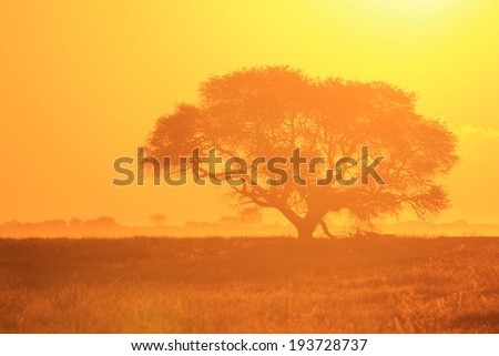 African Sunset - Golden Background of Nature - Glow of Life - stock photo
