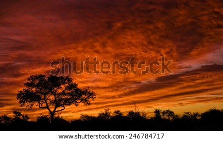 African sunset in the Kruger National Park, South Africa - stock photo