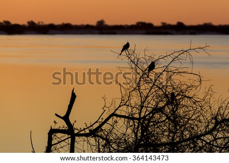 African sunset on Zambezi river, in front silhouette of two birds,  Caprivi strip region, Namibia - stock photo