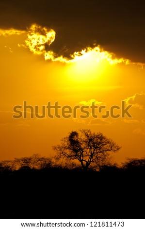 African Sunset, Ruaha National Park, Tanzania. - stock photo