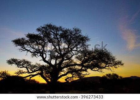 African sunset tree silhouette  - stock photo