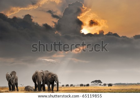 African sunset with elephants - stock photo