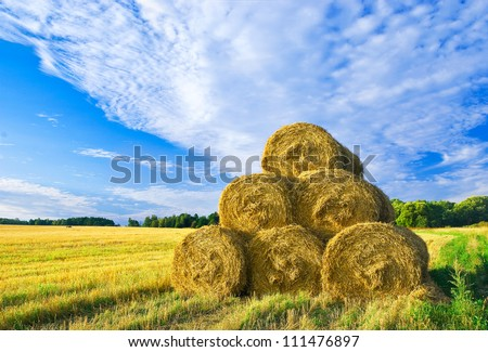 After a harvest - stock photo