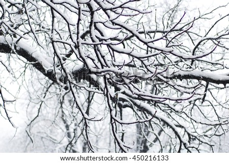 after blizzards, the tree branch in the snow - stock photo