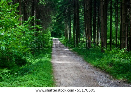after rain forest - stock photo
