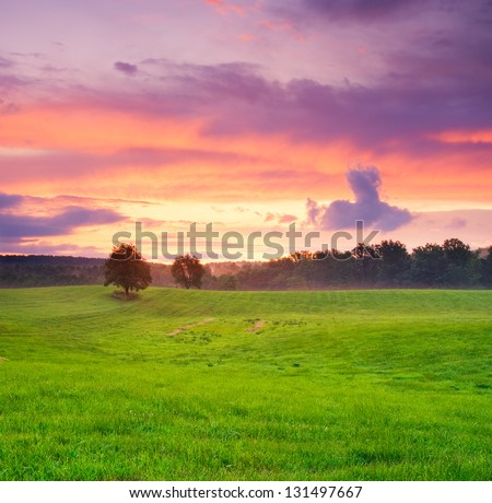After sunset trees and meadow - stock photo