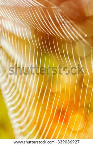 After the rain, the hidden beauty of this cobweb  - stock photo