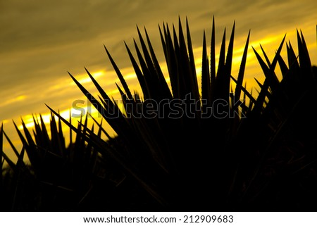 Agave tequila landscape back light sunset to Guadalajara, Jalisco, Mexico. - stock photo