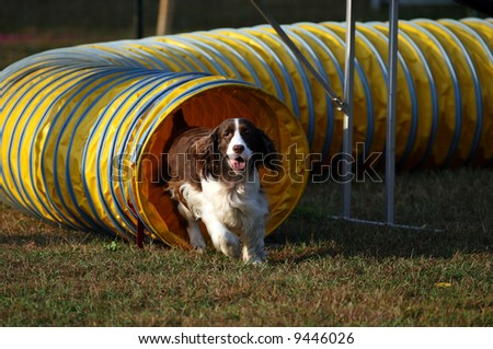 Agility Dog Exiting Tunnel - stock photo