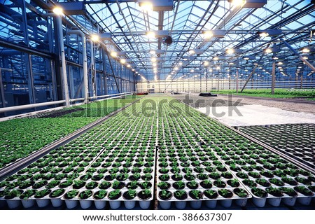 agribusiness greenhouse seedling spring - stock photo