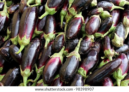 Agricultural background, a dark blue eggplant - stock photo