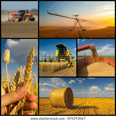 Agricultural collage representing phases of wheat production. - stock photo