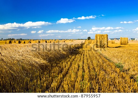 Agricultural field on which wheat has partially been cleaned - stock photo