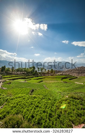 Agricultural field Spiti Valley, Himachal Pradesh, India - stock photo