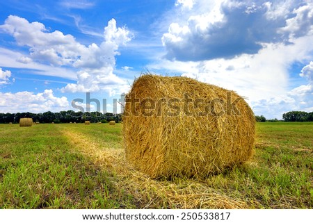 agricultural field with hay rolls at summer time  - stock photo