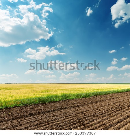 agricultural fields and deep blue sky with clouds - stock photo