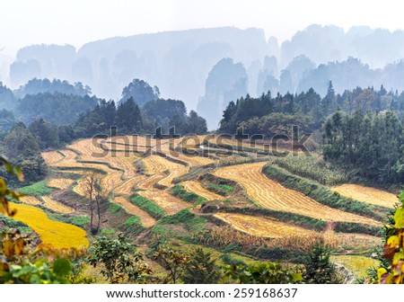 Agricultural fields. Zhangjiajie National Forest Park was officially recognized as a UNESCO World Heritage Site - China - stock photo