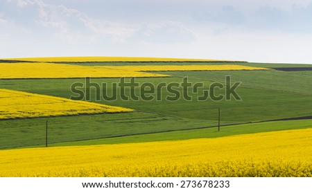 Agricultural land tillage, wheat and rape against the blue sky with clouds - stock photo