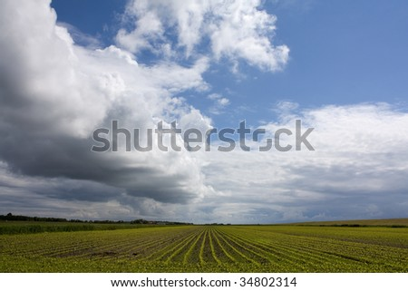 Agricultural landscape in Holland - stock photo