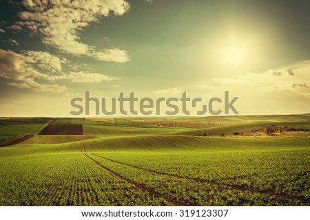 Agricultural landscape with green fields on hills and sun, vintage picture - stock photo