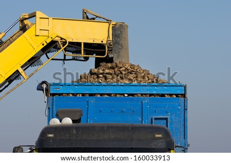 Agricultural mechanization dumping sugar beet in trailer - stock photo