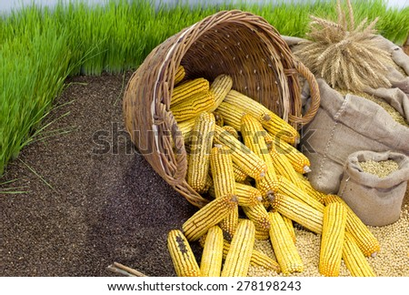 Agricultural product assortment, corn cob in basket, cereals in sacks and growing wheat in background - stock photo