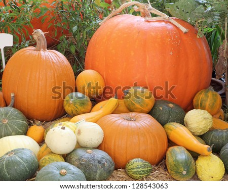 Agricultural products show - stock photo