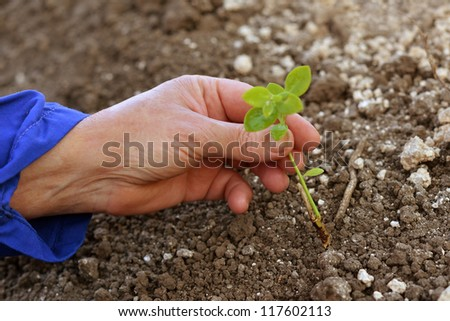 Agricultural worker holding a green young plant growing in the soil. Spring, growth, new life, ecology, environmental, nature preservation concept - stock photo