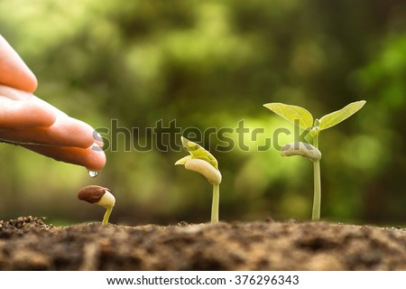 Agriculture , Baby plants seeding - Farmer hand watering young baby bean plants seedling on fertile soil with green background - stock photo