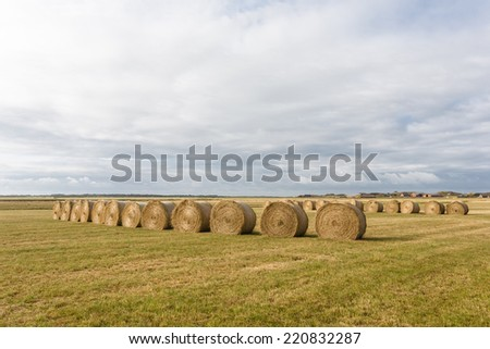 Agriculture background with many of haystacks, Denmark. - stock photo