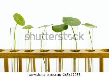 Agriculture concept, Plant inside test tube - stock photo