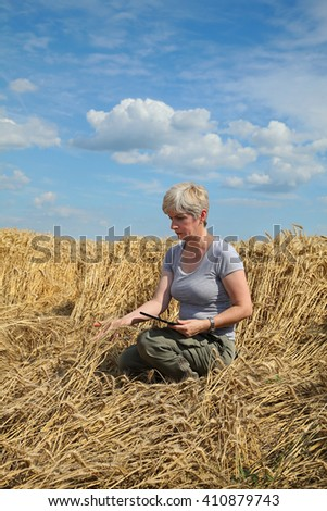 Agriculture, desperate farmer  examine damaged wheat  field after storm - stock photo
