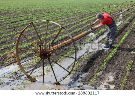 Agriculture, farmer in paprika field fix irrigation system - stock photo