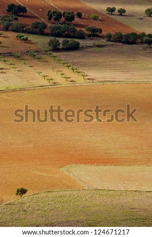 Agriculture fields of crops, olive oils in Alentejo region, Portugal - stock photo