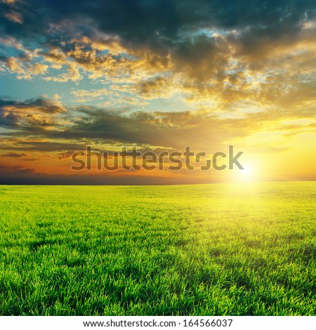 agriculture green field and sunset - stock photo