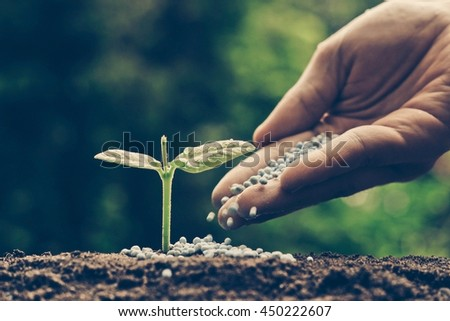 Agriculture. Growing plants. Plant seedling. Hand nurturing young baby plants growing on fertile soil with natural green background - stock photo