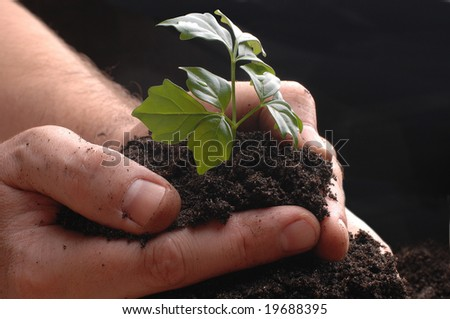 AGRICULTURE hands ground plant - stock photo