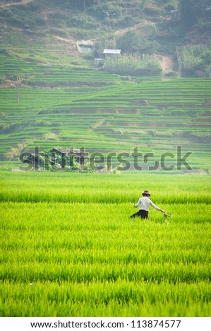 Agriculture in the Northern part of Vietnam - stock photo