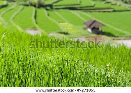 agriculture industry - stock photo