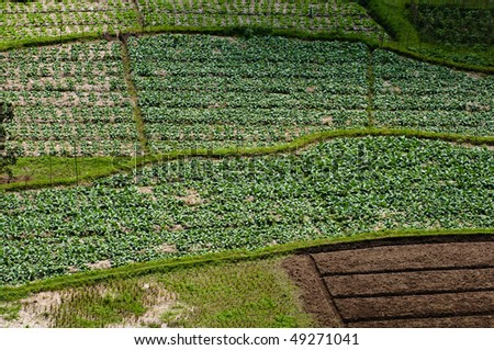 agriculture plants high angle - stock photo