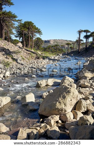 Agrio river, Patagonia, Neuquen. Land of dinosaurs. Provincial Park of Copahue - stock photo