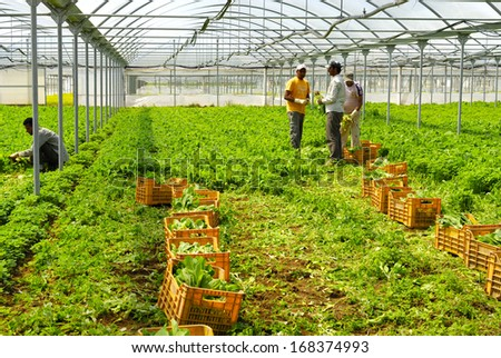 AGRO PONTINE, LATINA, CENTRAL ITALY- JUNE 5: Immigrants from Bangladesh working in greenhouses where they produce vegetables and salad, June 5, 2010 in Latina, Lazio, Central Italy. - stock photo