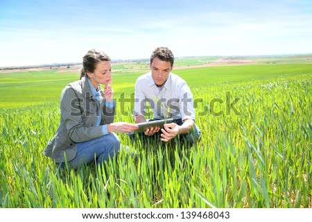 Agronomist looking at wheat quality with farmer - stock photo