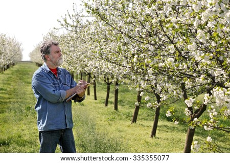 Agronomist or farmer examine blooming cherry trees in orchard, and writing data - stock photo