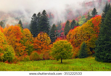 Air Morning mist at sunrise over the alpine forests and meadows of the Carpathians fall is very beautiful after the rain. Picturesque and paint colors of autumn foliage in the wild in Ukraine - stock photo