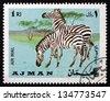 AJMAN - CIRCA 1969: a stamp printed in the Ajman shows Plains Zebra, Equus Quagga, Animal, circa 1969 - stock photo