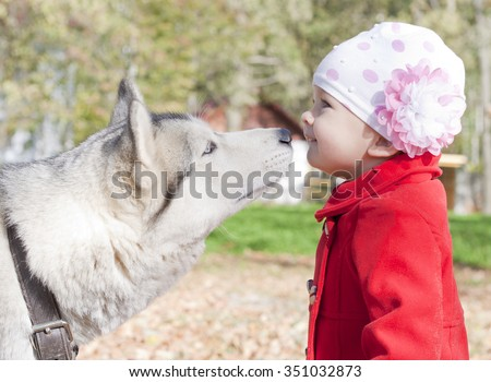 Alascan cute pet hasky kissing little girl. Friendly relationships between animal and people. Adorable pet of th little toddler. Walk with hansome husky in the autumn park outdoors.  Colorful photo.  - stock photo