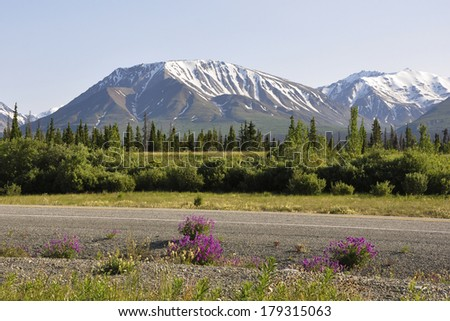 alaskan road view - stock photo