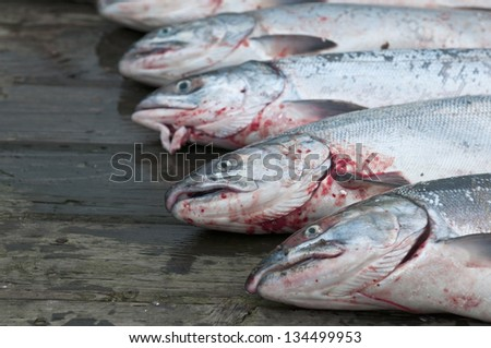 Alaskan Salmon fish detail - stock photo