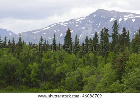 Alaskan wilderness - stock photo